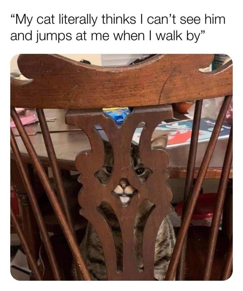 """Table - """"My cat literally thinks I can't see him and jumps at me when I walk by"""""""