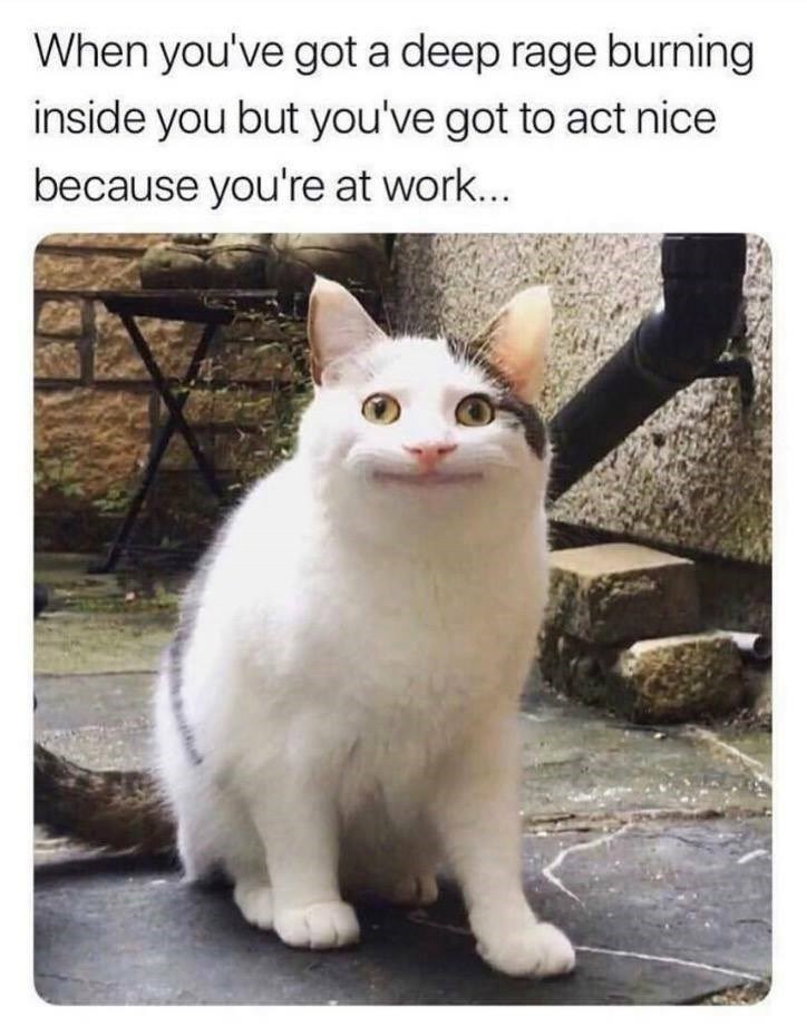 Cat - When you've got a deep rage burning inside you but you've got to act nice because you're at work...
