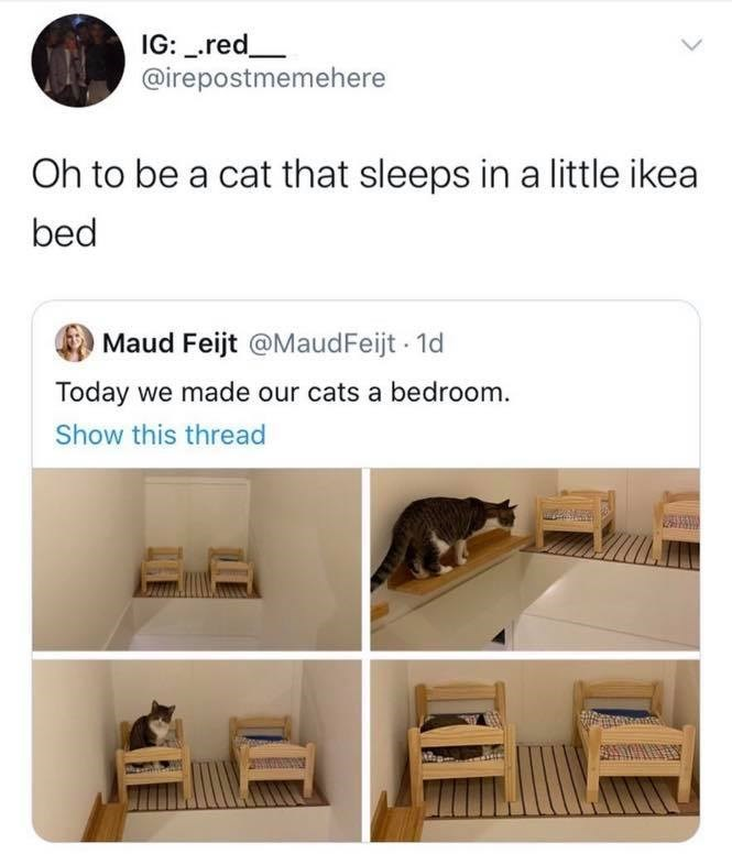 Product - IG: _.red_ @irepostmemehere Oh to be a cat that sleeps in a little ikea bed Maud Feijt @MaudFeijt 1d Today we made our cats a bedroom. Show this thread