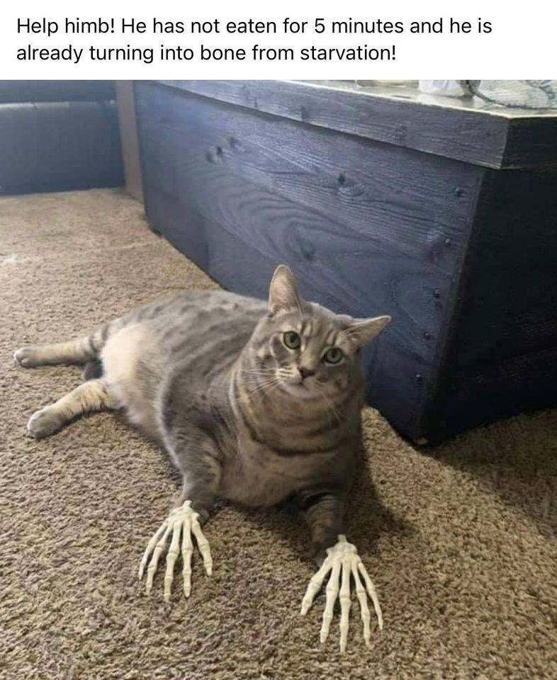 Cat - Help himb! He has not eaten for 5 minutes and he is already turning into bone from starvation!