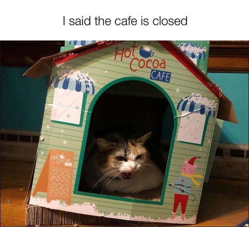 Cat - I said the cafe is closed HO COcoa CAFE HO Cacoa RARA