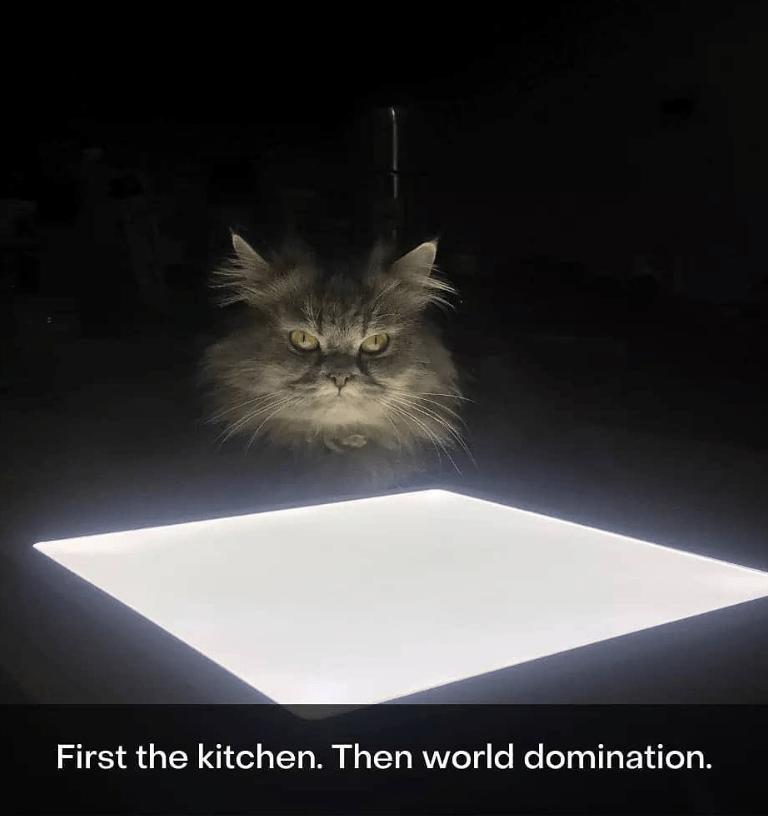 Cat - First the kitchen. Then world domination.