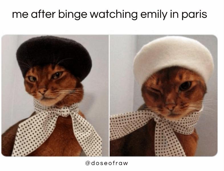 Cat - me after binge watching emily in paris @doseofraw