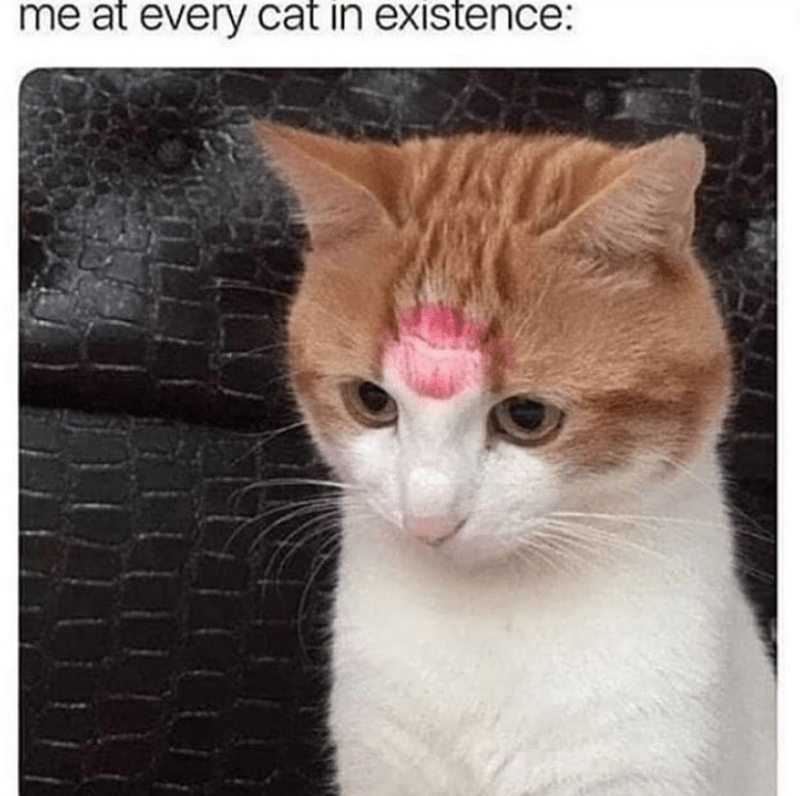 Cat - me at every cat in existence: