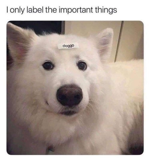 I only label the important things cute white fluffy dog with a sticker that reads doggo on its forehead