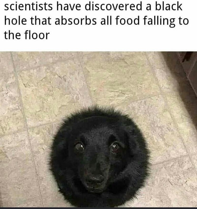Dog - scientists have discovered a black hole that absorbs all food falling to the floor