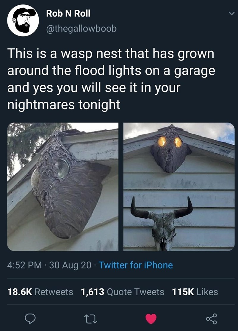 Adaptation - Rob N Roll @thegallowboob This is a wasp nest that has grown around the flood lights on a garage and yes you will see it in your nightmares tonight 4:52 PM · 30 Aug 20 · Twitter for iPhone 18.6K Retweets 1,613 Quote Tweets 115K Likes