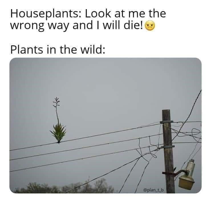 Line - Houseplants: Look at me the wrong way and I will die! Plants in the wild: @plan_t b