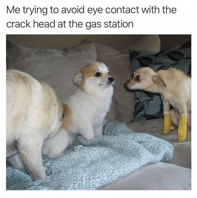 Dog - Me trying to avoid eye contact with the crack head at the gas station