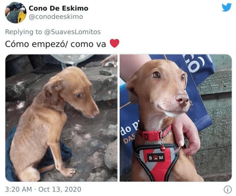 Dog - Cono De Eskimo @conodeeskimo Replying to @SuavesLomitos Cómo empezó/ como va do p' DAS BM 3:20 AM Oct 13, 2020