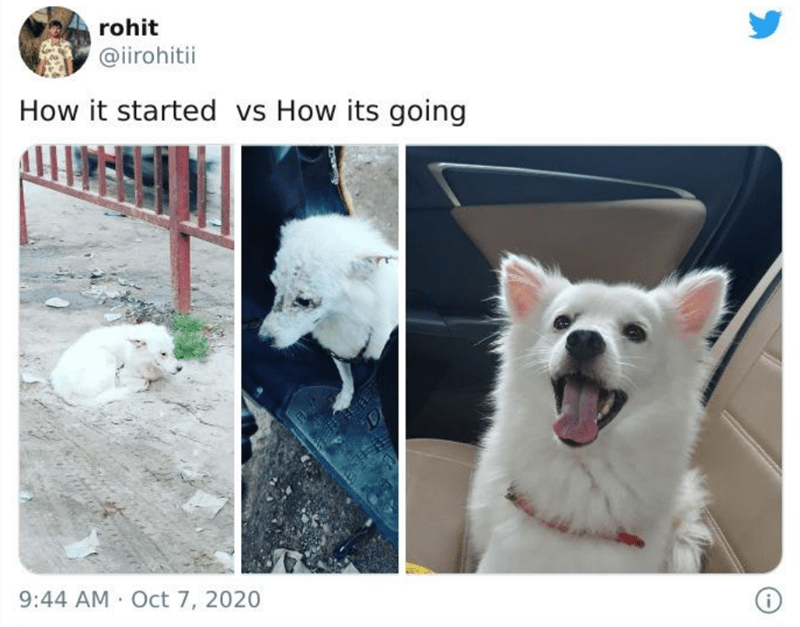 Dog - rohit @irohitii How it started vs How its going Di 9:44 AM Oct 7, 2020