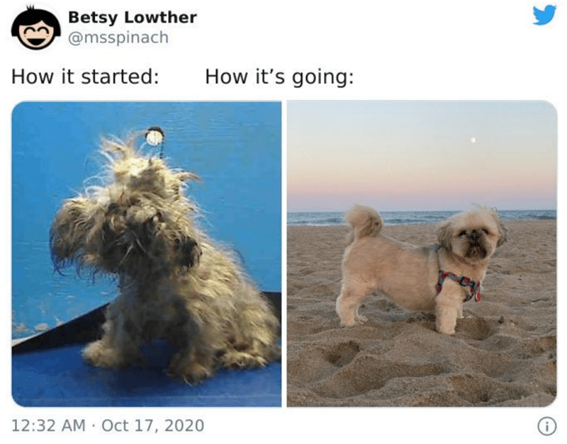 Dog - Betsy Lowther @msspinach How it started: How it's going: 12:32 AM · Oct 17, 2020