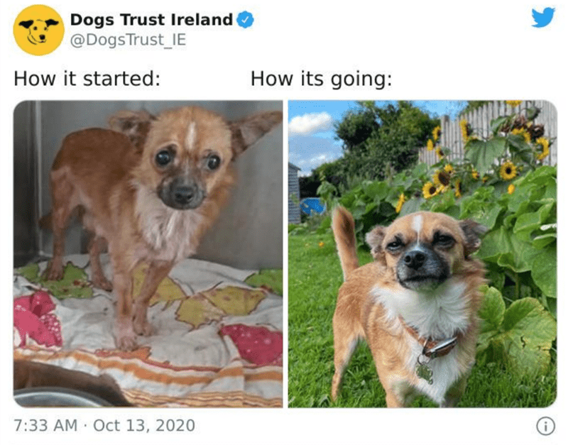 Dog - Dogs Trust Ireland @DogsTrust_IE How it started: How its going: 7:33 AM Oct 13, 2020