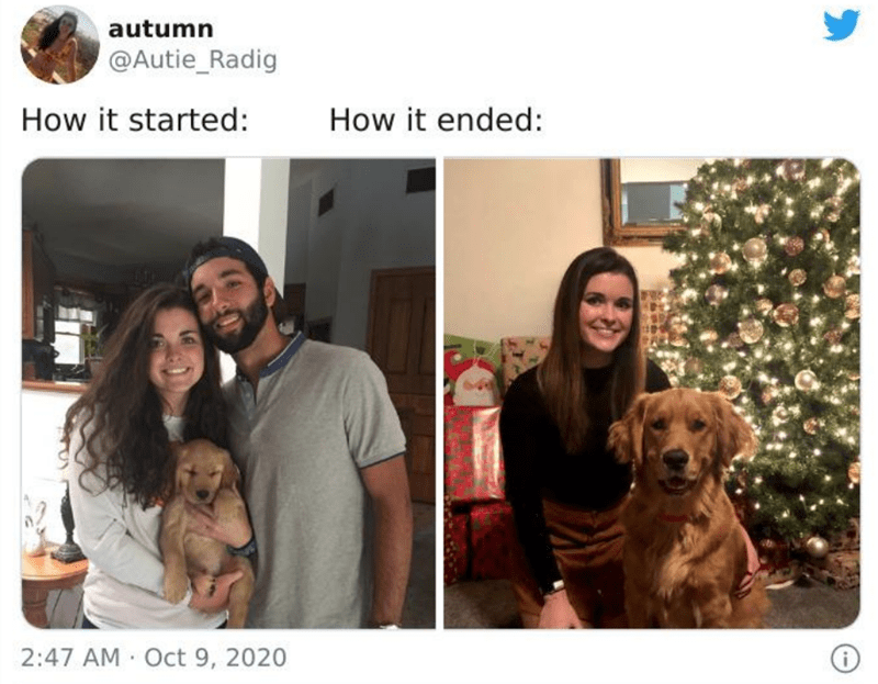 Dog - autumn @Autie_Radig How it started: How it ended: 2:47 AM Oct 9, 2020