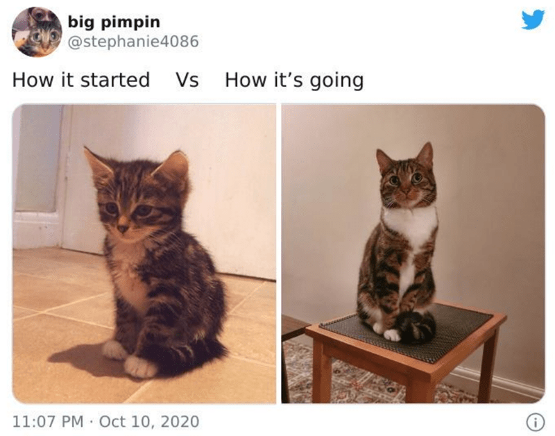 Cat - big pimpin @stephanie4086 How it started Vs How it's going 11:07 PM Oct 10, 2020