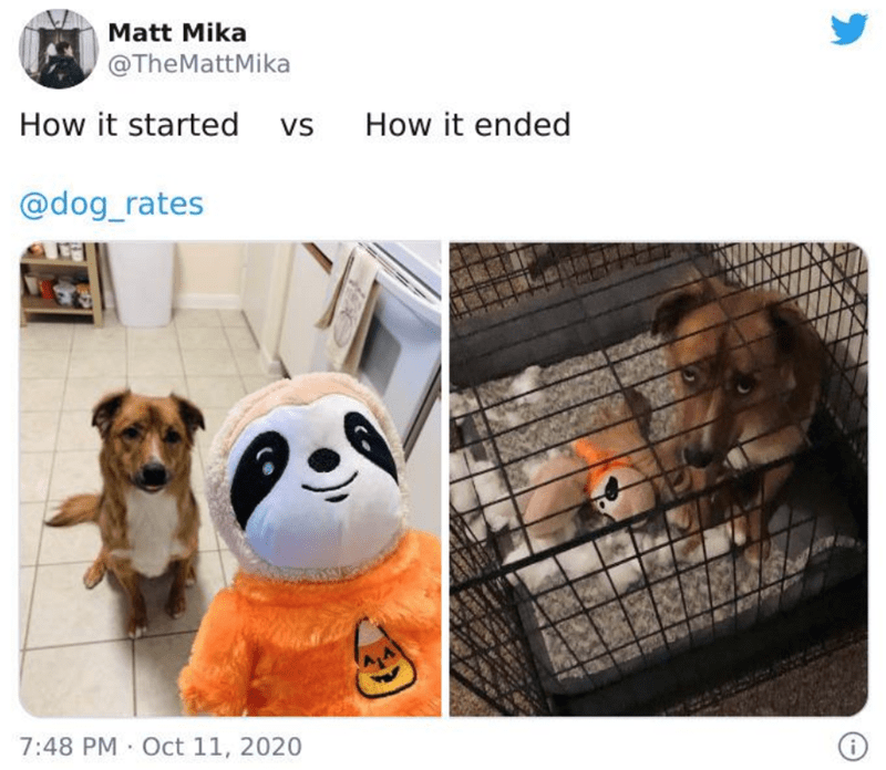 Dog breed - Matt Mika @TheMattMika How it started vs How it ended @dog_rates 7:48 PM Oct 11, 2020