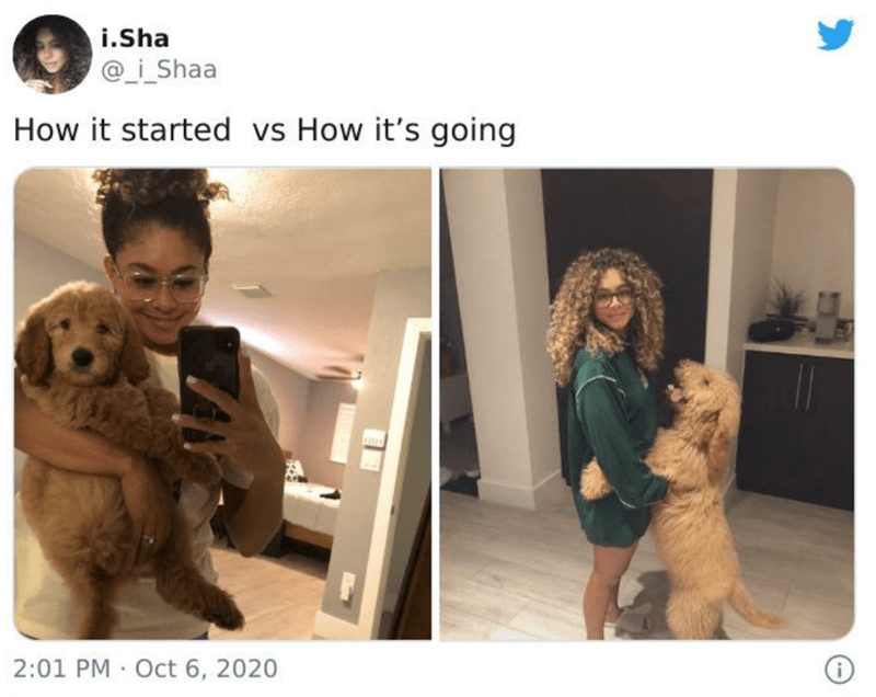 Dog - i.Sha @_i_Shaa How it started vs How it's going 2:01 PM Oct 6, 2020