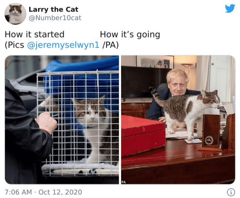 Product - Larry the Cat @Number10cat How it started How it's going (Pics @jeremyselwyn1 /PA) 3 PA 7:06 AM Oct 12, 2020