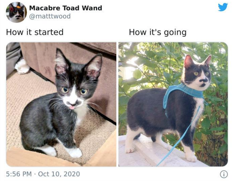 Mammal - Macabre Toad Wand @matttwood How it started How it's going 5:56 PM · Oct 10, 2020