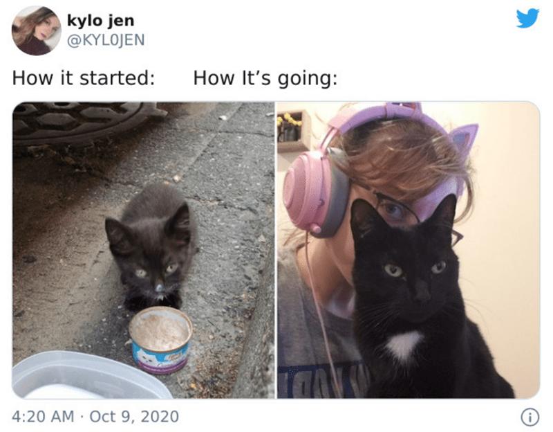 Cat - kylo jen @KYLOJEN How it started: How It's going: 4:20 AM · Oct 9, 2020
