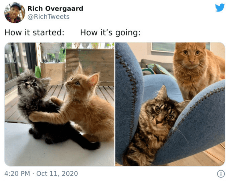 Cat - Rich Overgaard @RichTweets How it started: How it's going: 4:20 PM · Oct 11, 2020