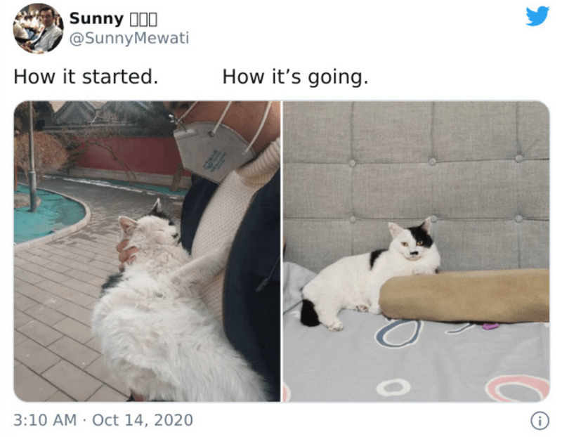 Cat - Sunny 100 @SunnyMewati How it started. How it's going. 3:10 AM · Oct 14, 2020