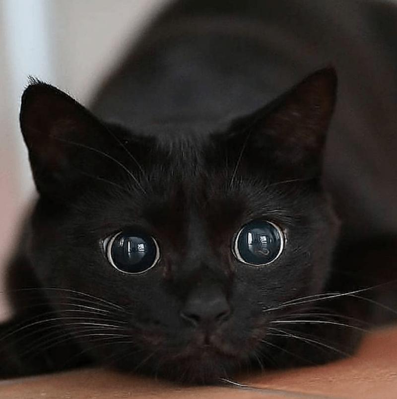 Cat - の
