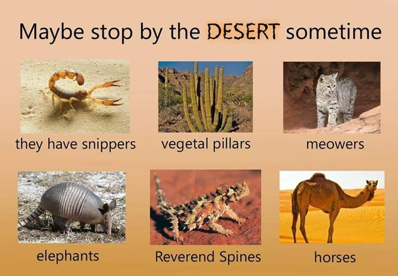 Terrestrial animal - Maybe stop by the DESERT sometime they have snippers vegetal pillars meowers elephants Reverend Spines horses