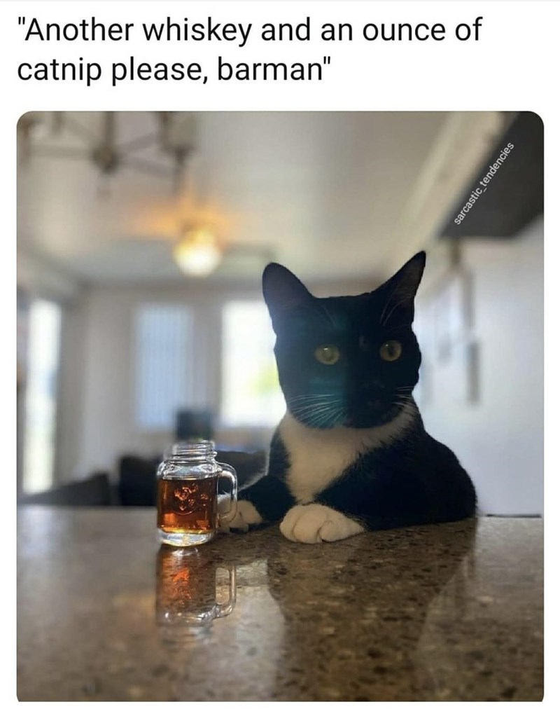 """Cat - """"Another whiskey and an ounce of catnip please, barman"""" sarcastic tendencies"""