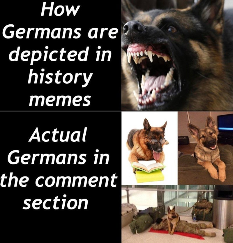 Canidae - How Germans are depicted in T history mеmes Actual Germans in the comment section