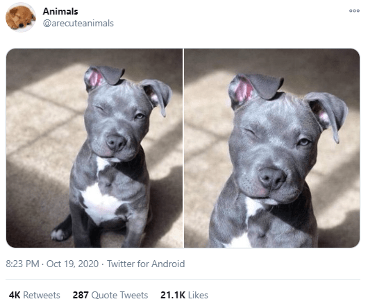 Dog - Animals 000 @arecuteanimals 8:23 PM - Oct 19, 2020 · Twitter for Android 4K Retweets 287 Quote Tweets 21.1K Likes