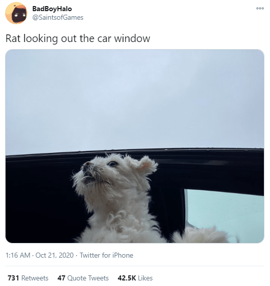 Text - Dog - BadBoyHalo @SaintsofGames 000 Rat looking out the car window 1:16 AM - Oct 21, 2020 - Twitter for iPhone 731 Retweets 47 Quote Tweets 42.5K Likes