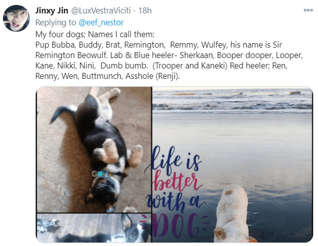 Text - Jinxy Jin @LuxVestraViciti - 18h Replying to @eef_nestor My four dogs; Names I call them: Pup Bubba, Buddy, Brat, Remington, Remmy, Wulfey, his name is Sir Remington Beowulf. Lab & Blue heeler- Sherkaan, Booper dooper, Looper, Kane, Nikki, Nini, Dumb bumb. (Trooper and Kaneki) Red heeler; Ren, Renny, Wen, Buttmunch, Asshole (Renji). 000 life is Pbetter with a C