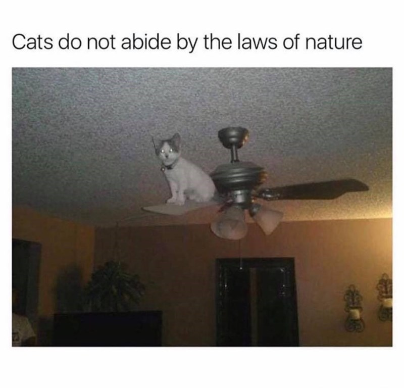 Cats do not abide by the laws of nature cat with glowing eyes sitting on a ceiling fan