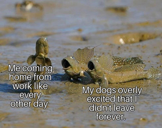 Adaptation - Me coming home from work like every other day My dogs overly excited that I didn't leave forever.