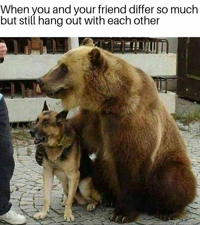 Mammal - When you and your friend differ so much but still hang out with each other
