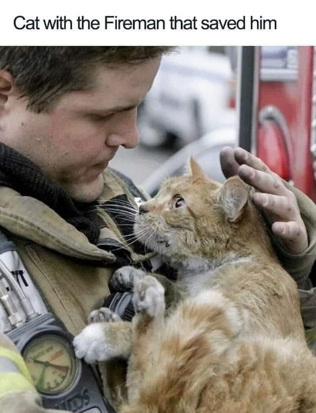 Felidae - Cat with the Fireman that saved him