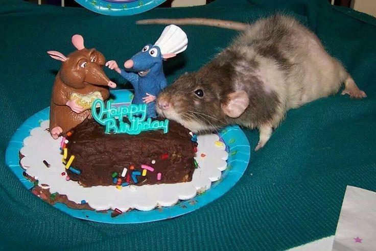 Rat - PRday