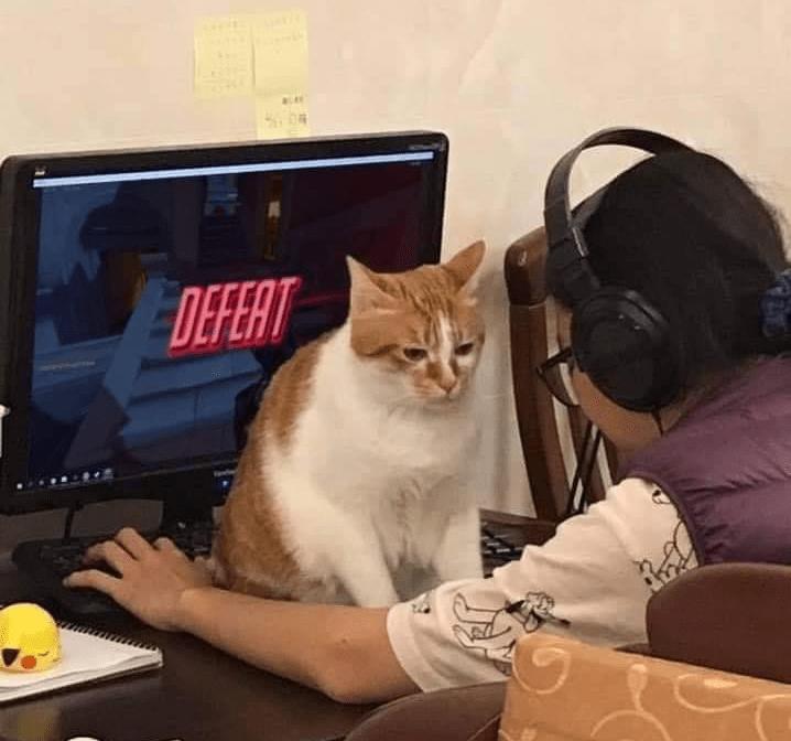 Cat - DEFERT