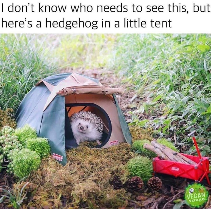 Grass - I don't know who needs to see this, but here's a hedgehog in a little tent Coleman VEGAN VIZARD.