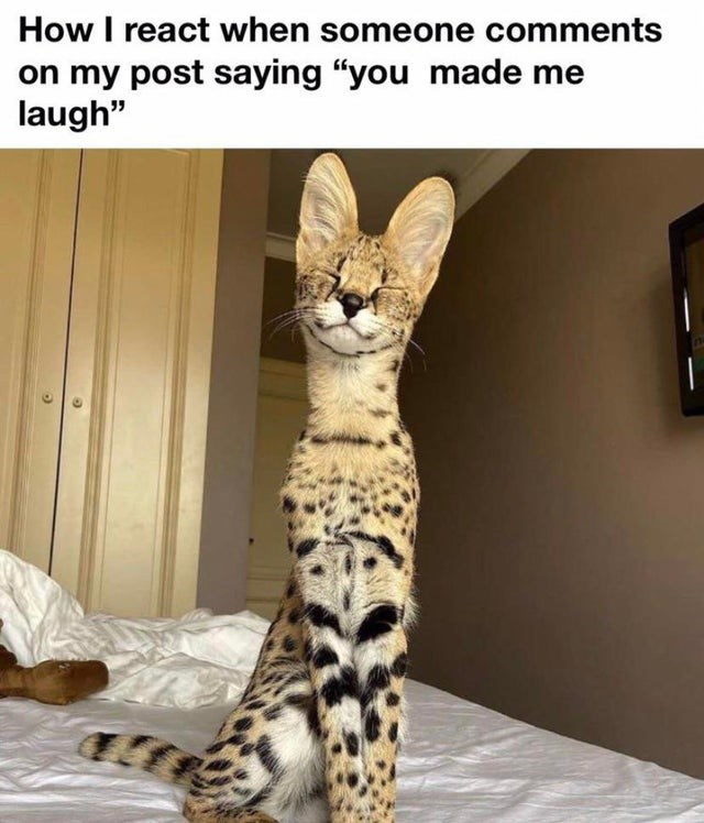 """Cat - How I react when someone comments on my post saying """"you made me laugh"""""""