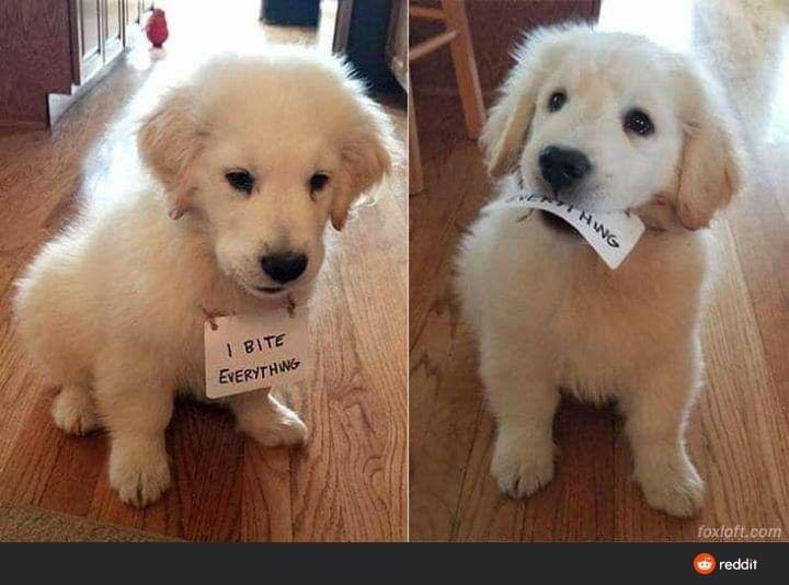 Dog - HWG I BITE EVERYTHWG foxloft.com O reddit