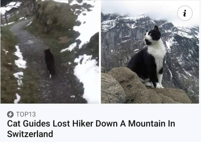 Nature - TOP13 Cat Guides Lost Hiker Down A Mountain In Switzerland