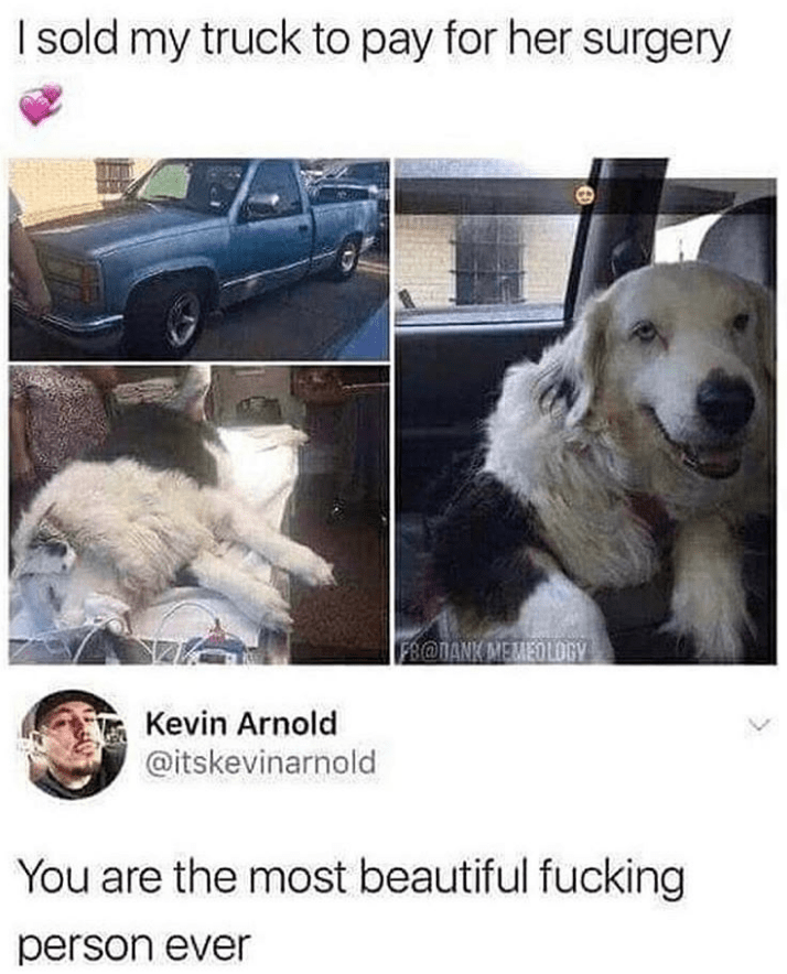 Dog - I sold my truck to pay for her surgery FR@TANK MEMEOLOGY Kevin Arnold @itskevinarnold You are the most beautiful fucking person ever