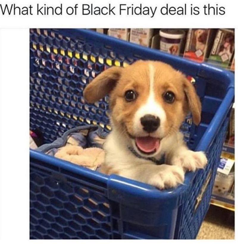 Dog - What kind of Black Friday deal is this