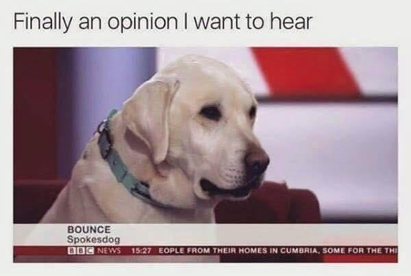Dog - Finally an opinion I want to hear BOUNCE Spokesdog BBC NEWS 15:27 EOPLE FROM THEIR HOMES IN CUMBRIA, SOME FOR THE THI