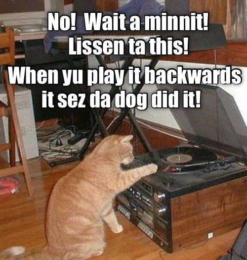 No wait a minute! Listen to this when you play it backwards it says the dog did it | cat pawing at a record player