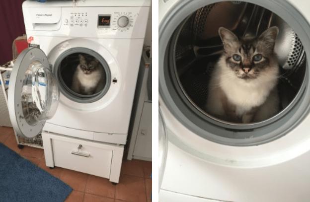 Washing machine - End