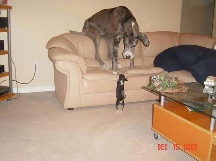 Dog - DEC 2008