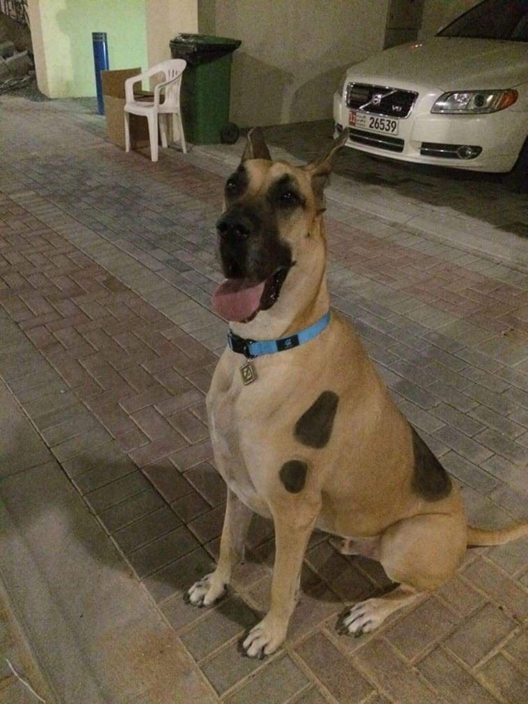 Dog - 26539